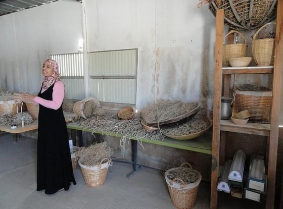 3_miriam-aborkeek-desert-daughter-bedouin-bedoin-cosmetics-israel-herbs-560x414